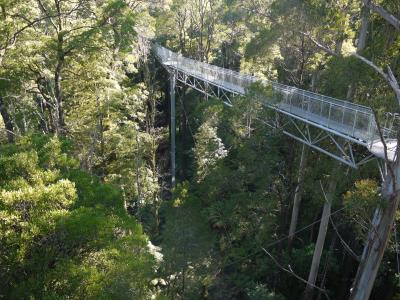 Treewalk at Otway rainforest