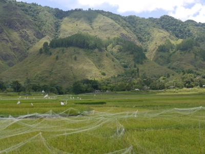 Danau Toba countryside