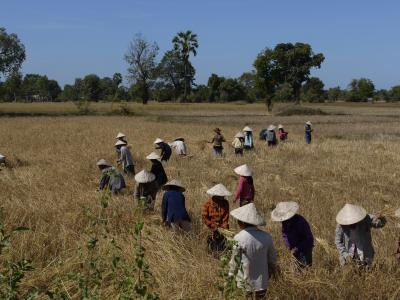 Women tending fields on Don Det