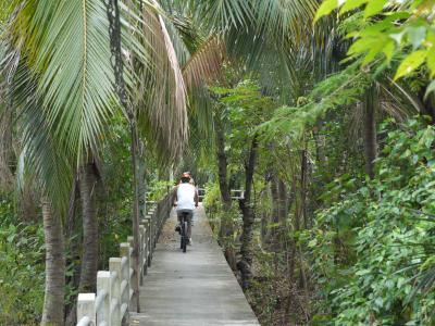 Bicycling in the Bangkok Jungle