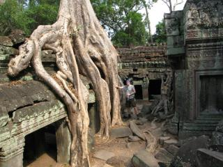 Tree roots swallowing Ta Prohm