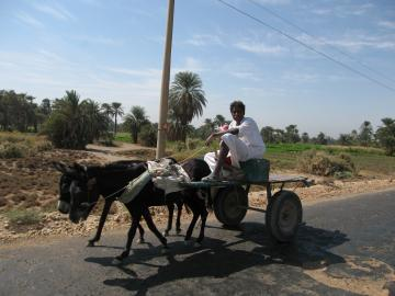 Donkey carts are everywhere, near Daraw