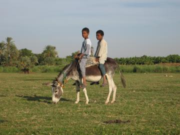 Two boys on a donkey near Daraw