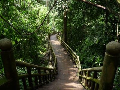 Trail in Cuc Phuong national park